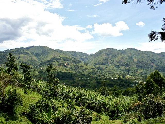 Bwindi Impenetrable Forest, Uganda
