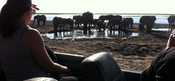 11-day Botswana Northern Highlights (Adventurer)