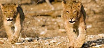 Northern Tuli Game Reserve