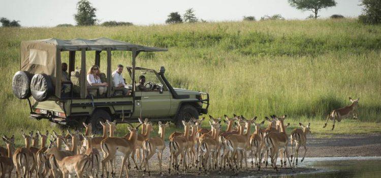 African Safari Travel in 2022