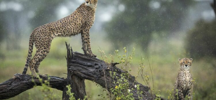 What are Africa's game-viewing seasons?