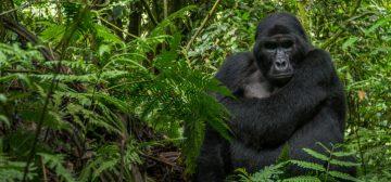 4-day Rwanda Mountain Gorilla Trek