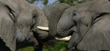 14-day Botswana Wildparks