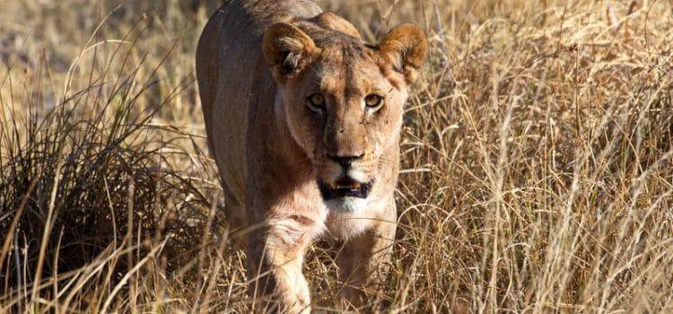 Khwai Private Reserve