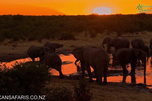 Elephants at waterhole, Etosha National Park