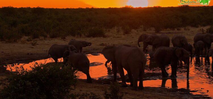 Elephants at waterhole – Etosha National Park