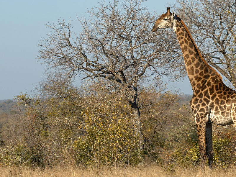 Manyeleti Private Game Reserve, South Africa