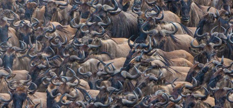 Masai Mara Campsite
