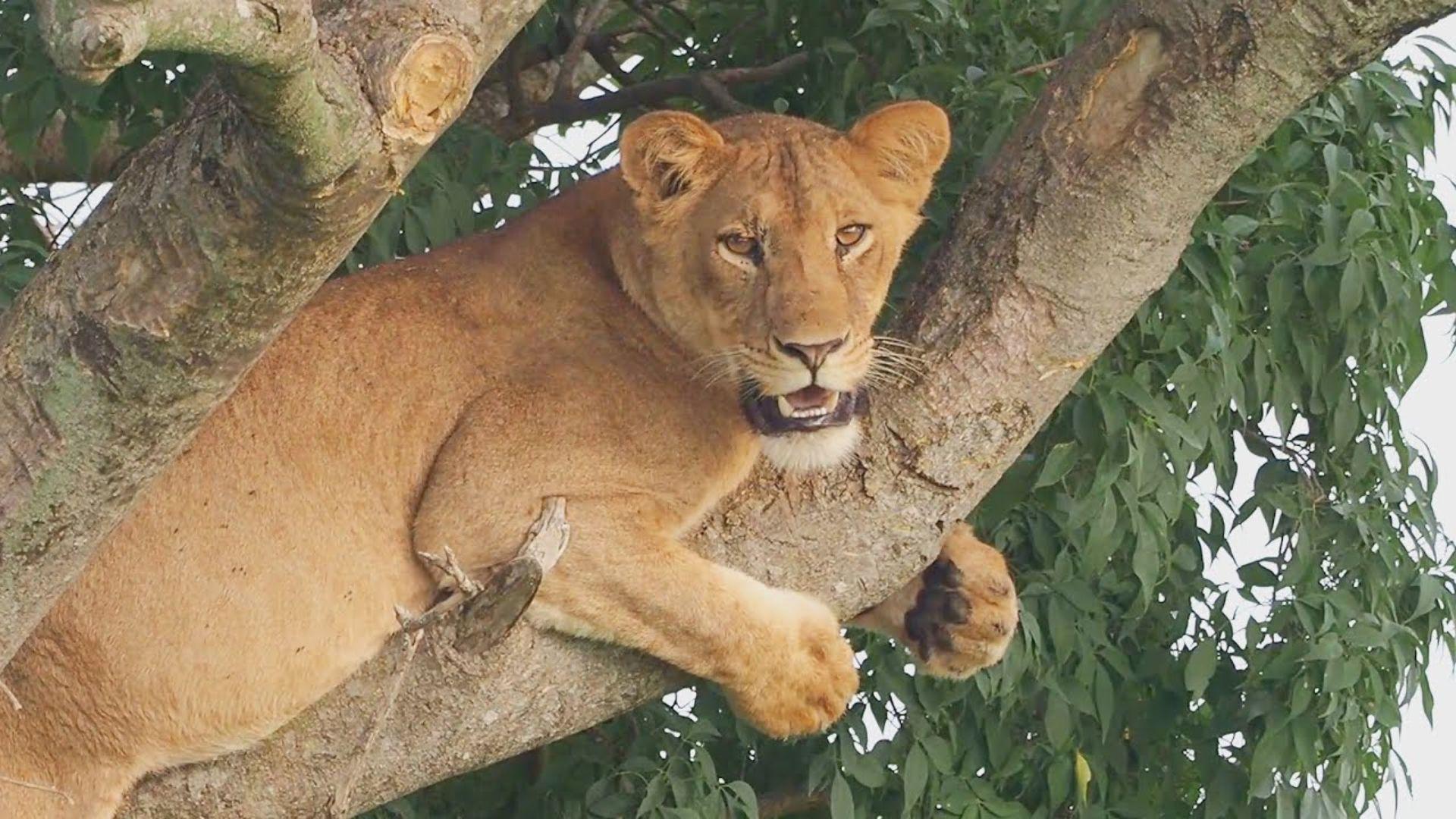 Amazing Wildlife Safari in Murchison Falls National Park, Uganda