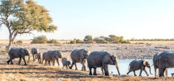 7-day Southern Namibia Adventure (Accommodated)