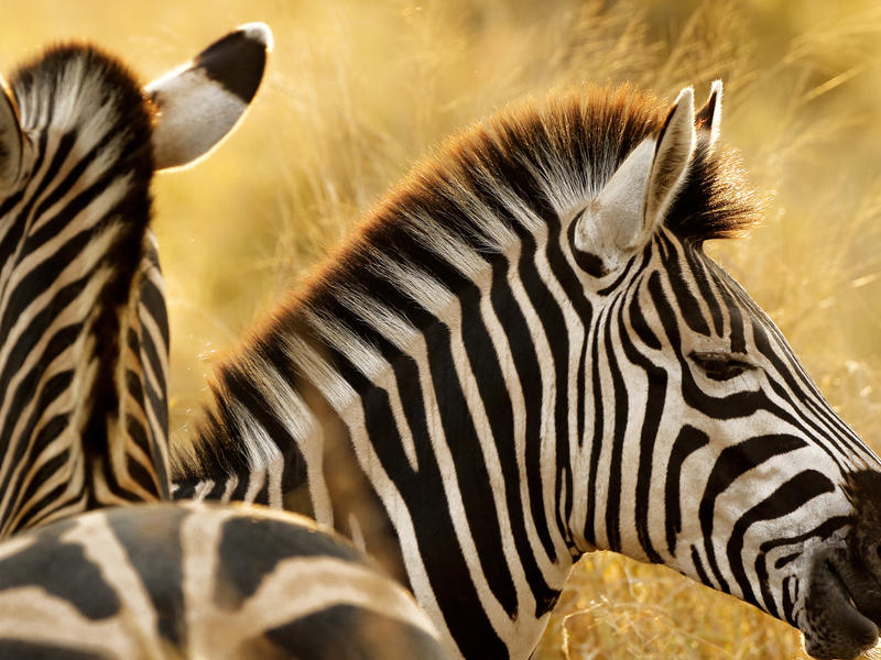 Balule Private Game Reserve, South Africa