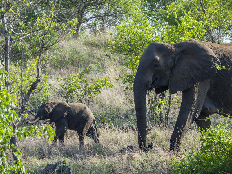 Thornybush Private Game Reserve, South Africa