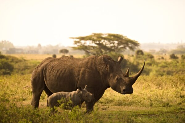 Can I book an African Safari directly?