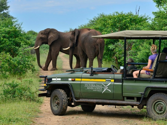 Game drive from Victoria Falls River Lodge