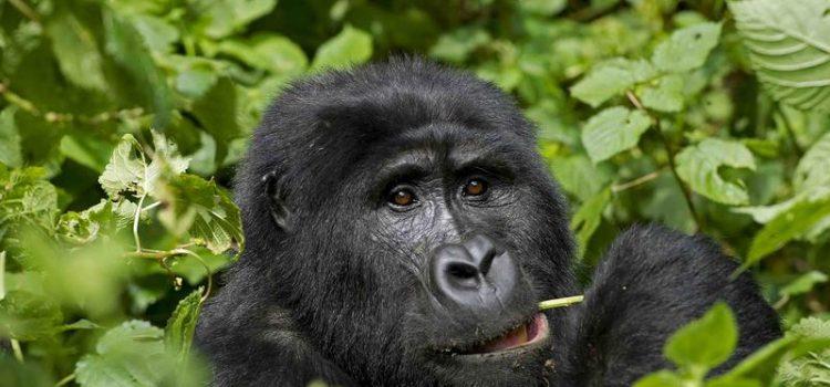 Rwanda Tourism Visa Increase