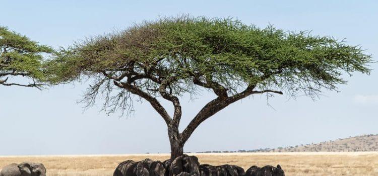 Eastern Serengeti