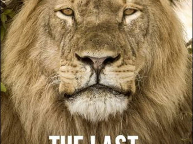 The Last Lions of Africa, by Anthony Ham