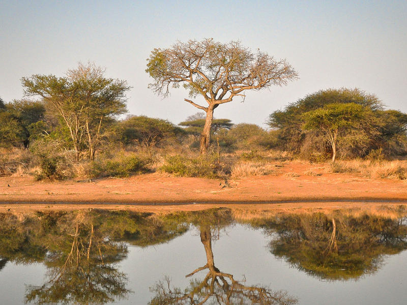Timbavati Private Game Reserve, South Africa