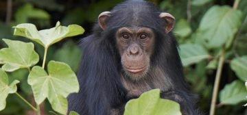8-day Uganda Gorillas and Game