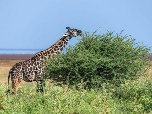 World Giraffe Day - 21 June
